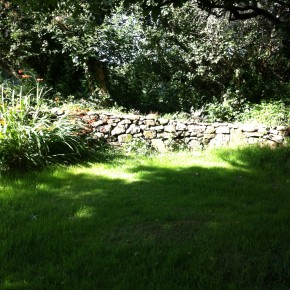 Lovely little stone wall after a few months growing in.